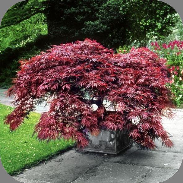 japanse planten