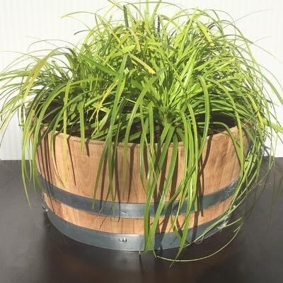 Kwart portvat 28 liter met Carex Oshimensis 'Everillo' (Zegge)