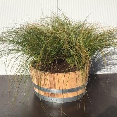 Kwart portvat 28 liter met Carex Testacea 'Prairie fire' (Zegge)