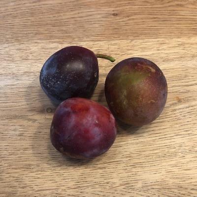 Pruim (Prunus)