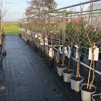 Fruitbomen bij Tas Boomwekerij